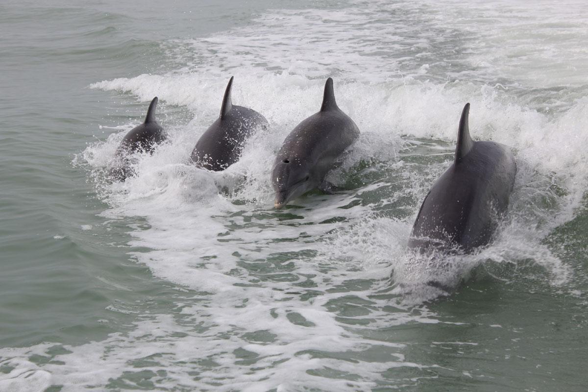 Delphine in Florida sehen