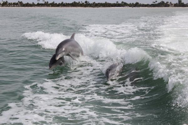 Delphine mögen es zu springen