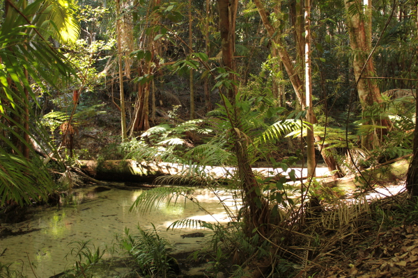 Dschungel auf Fraser Island