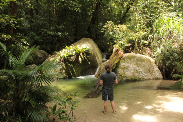 Dschungel in Port Douglas