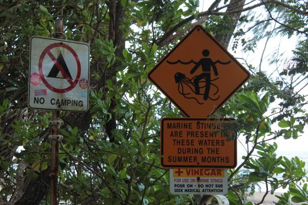 Bluebottle, jellyfish, Australien - die gefährlichsten Tiere in Australien, sind die, die man quasi nicht sieht...