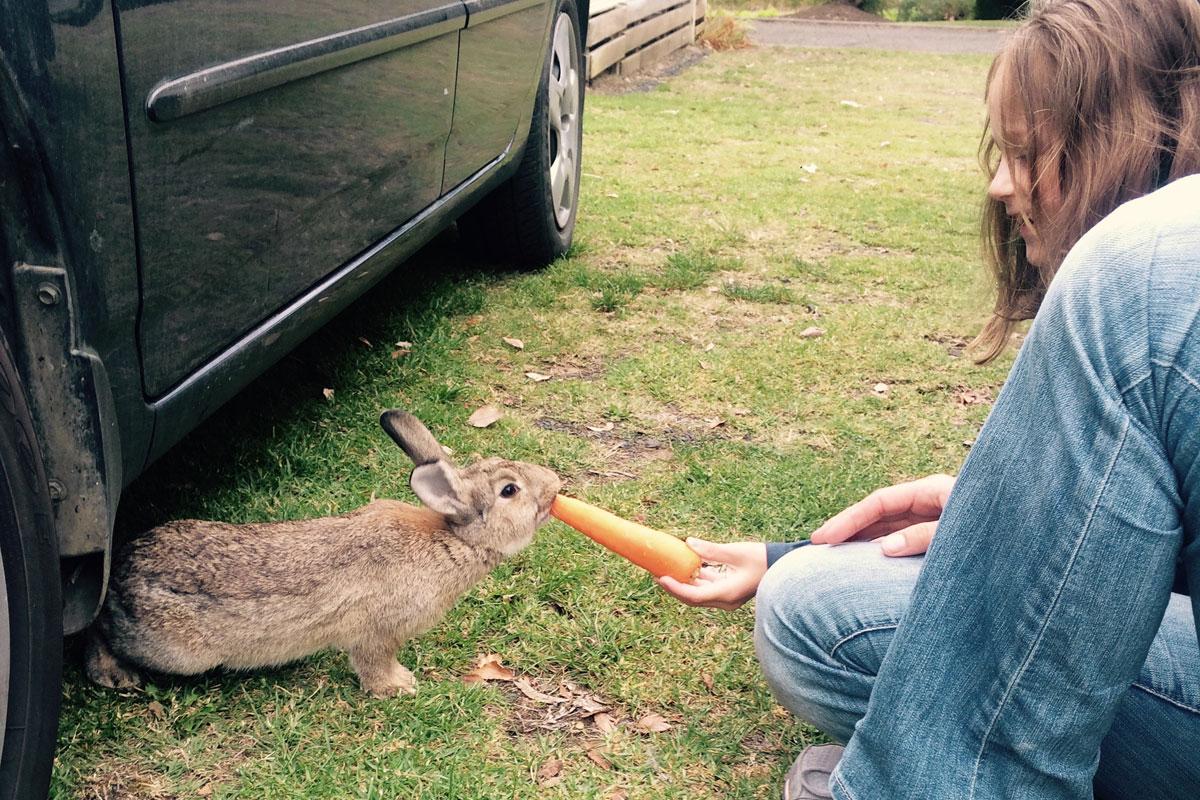 Hasen füttern in Australien
